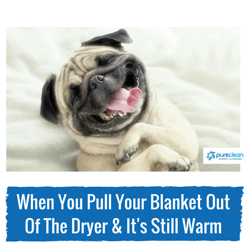 How To Remove Pet Smells From Blankets Pureclean