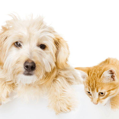 Pet Stain & Odor Cleaning in Seattle WA